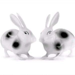 Rabbits Vaastu Remedies